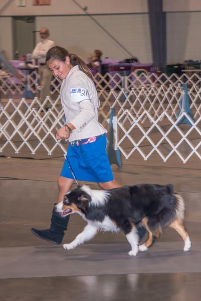 2015 Labor Day Dog Show