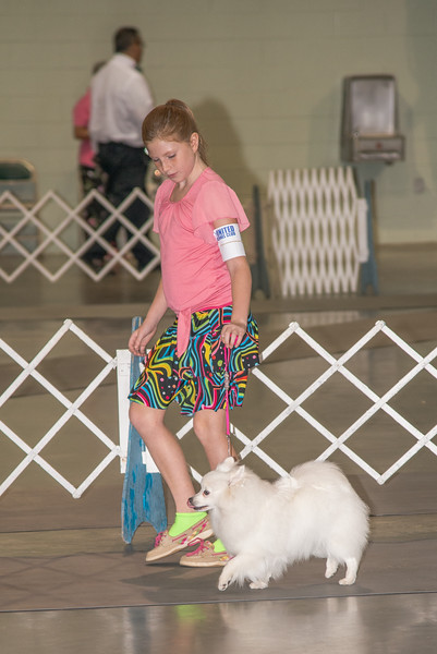 Labor Day Dog Show at Perry GA